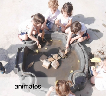 Amimales